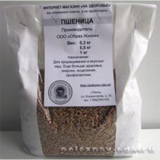 Пшеница для проращивания и приготовления вкусных каш